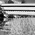 Saucks Bridge And Reeds by Paul W Faust -  Impressions of Light