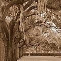 Savannah Sepia - Emmet Park by Carol Groenen