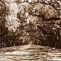 Savannah Sepia - The Old South by Carol Groenen
