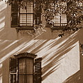 Savannah Sepia - Windows by Carol Groenen