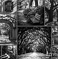 Savannah Shadows Collage by Carol Groenen