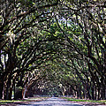 Savannah Wormsloe  by John McGraw