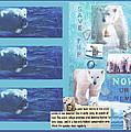 Save The Polar Bear Now Or Never by Mary Ann  Leitch