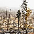 Sawback Burn, On Bow Valley Parkway by Ken Gillespie