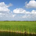 Sawgrass In The Florida Everglades by David R. Frazier
