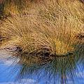Sawgrass by Marty Koch