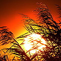Sawgrass Sunset  by Ines  Ganteaume