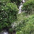 Sawpit Creek by Mike and Sharon Mathews