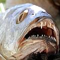 Fanged Fish Say Ahhhhhh by Belinda Lee