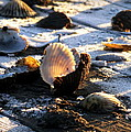 Half Shell On Ice by Karen Wiles