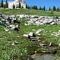 Scapegoat Amphitheater And Spring by Pam Little