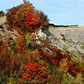 Scarborough Bluffs In Colour by Laura Yamada