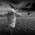 Scarecrow And Black Crows Over A Cornfield by Randall Nyhof