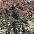 Scarecrow Cactus by David Kehrli