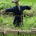 Scarecrow In A Rice Paddy In Wuzhen China. by Rob Huntley