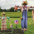 Scarecrows by Fran Gallogly