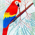 Scarlet Macaw by Greg Roberson