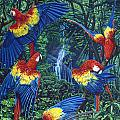 Scarlet Macaw Jungle by JQ Licensing