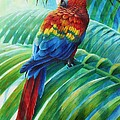 Scarlet Macaw On Palm by Christopher Cox