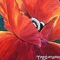 Scarlet Poppy by Tanja Ware