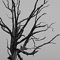Scary Tree IIi by Kelly Hazel