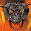 Sceliphron Spirifex 41 by Javier Torrent - Vwpics