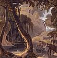 Scene In Sitsikamma - Elephants by Samuel Daniell