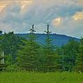 Scenery In Northern Pa by Jeanette Oberholtzer