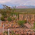 Scenic Boothill Cemetery In Tombstone Arizona by John Malone