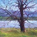Scenic Landscape Painting Through Tree - Spring Has Sprung - Color Fields - Original Fine Art by Quin Sweetman