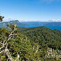 Scenic Urewera Np With Lake Waikaremoana In Nz by Stephan Pietzko