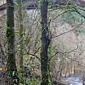 Scenic View Arch Bridge by Susan Garren