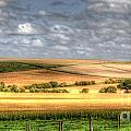 Scenic Wiltshire by Traci Law