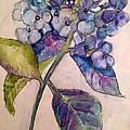 Scented Beauty by Sherry Harradence