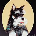Schnauzer by Art By - Ti   Tolpo Bader