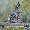 Schnauzer In Garden by Gail Dolphin