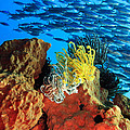 School Of Fishes by MotHaiBaPhoto Prints