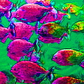 School Of Piranha V2 - Square by Wingsdomain Art and Photography