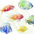 School Of Tropical Fish by Lanie Loreth