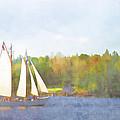 Schooner Castine Harbor Maine by Carol Leigh