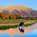 Schwabacher Morning Light  by Greg Norrell