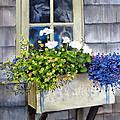'sconset Window Box by Karol Wyckoff
