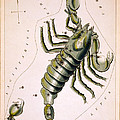 Scorpio Constellation  1825 by Daniel Hagerman