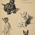 Scotch Terrier And White Westie by Cecil Charles Windsor Aldin