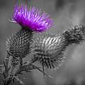 Scotland Calls 1 by Scott Campbell