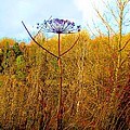 Scottish Thistle On The Firth by James Potts