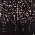 Scott's Trees by Maralea Norden