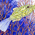 Scrawled Filefish by Pauline Walsh Jacobson