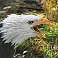 Screaming Eagle by Rick  Monyahan