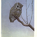 Screech Owl by Philip Ralley